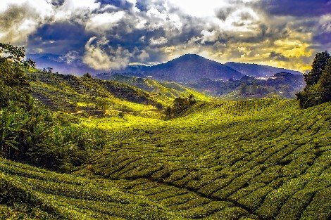 Kuala Lipis is in the Cameron Highlands