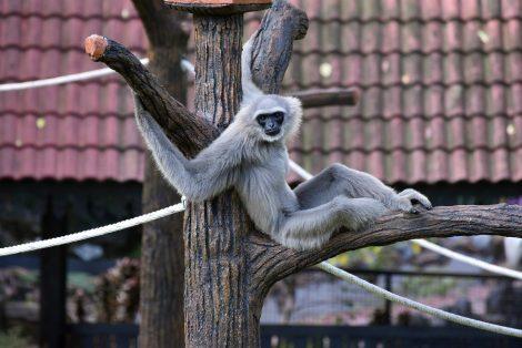 Johor Bahru Zoo