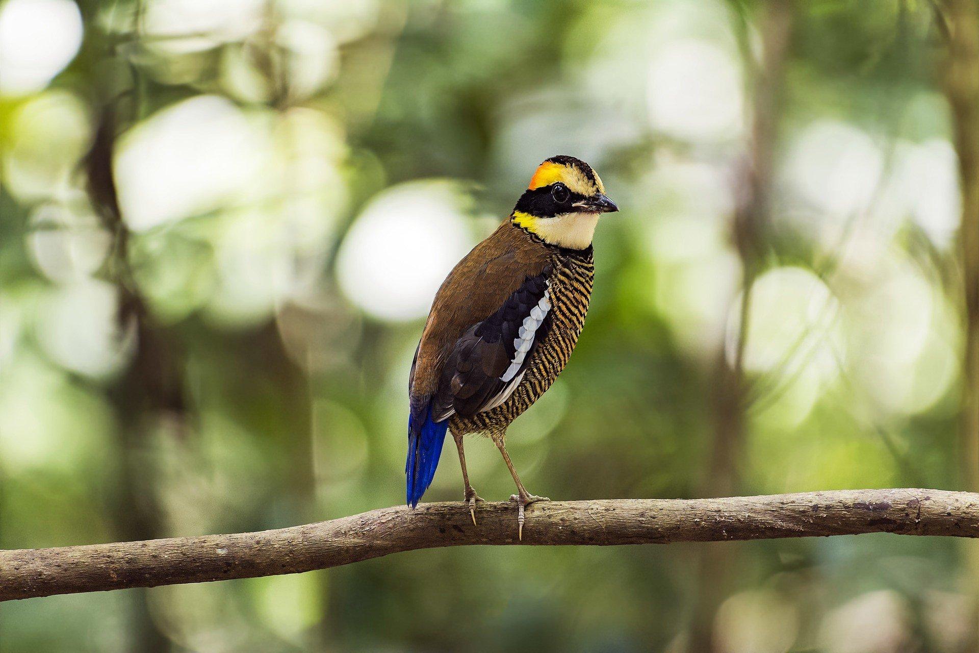 Jerantut is the access point to Taman Negara National Park