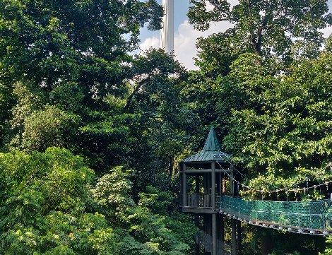 KL Forest Eco Park is a city centre nature reserve